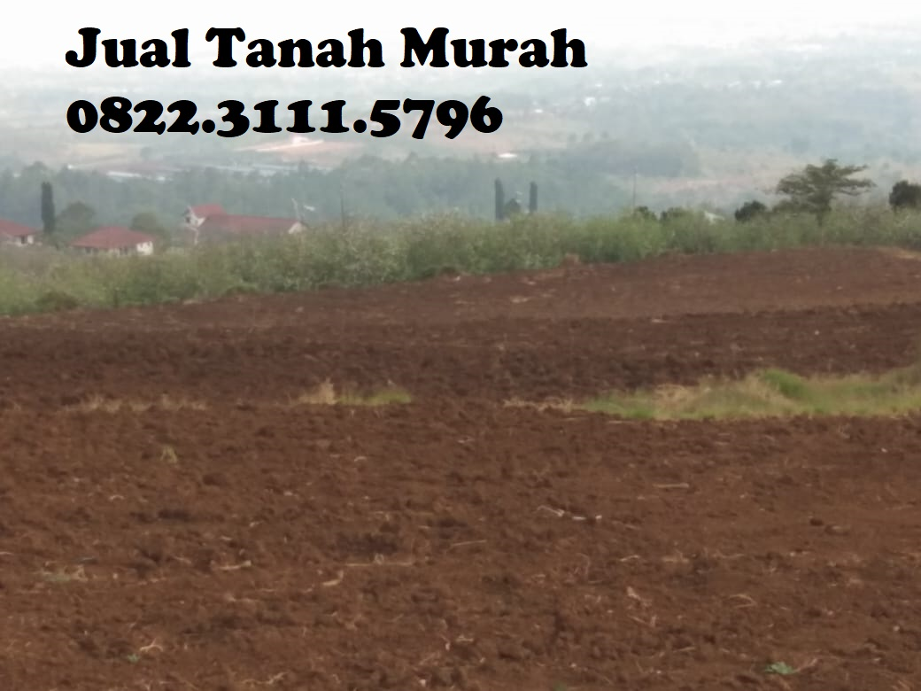 Jual Tanah Hektar Wonoayu - 0822.3111.5796   Tempat Iklan ...